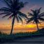 Palm Tree Sunrise at Beach Jupiter Island Florida