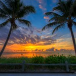 Two Coconut Trees at Sunrise on the Beach in Florida