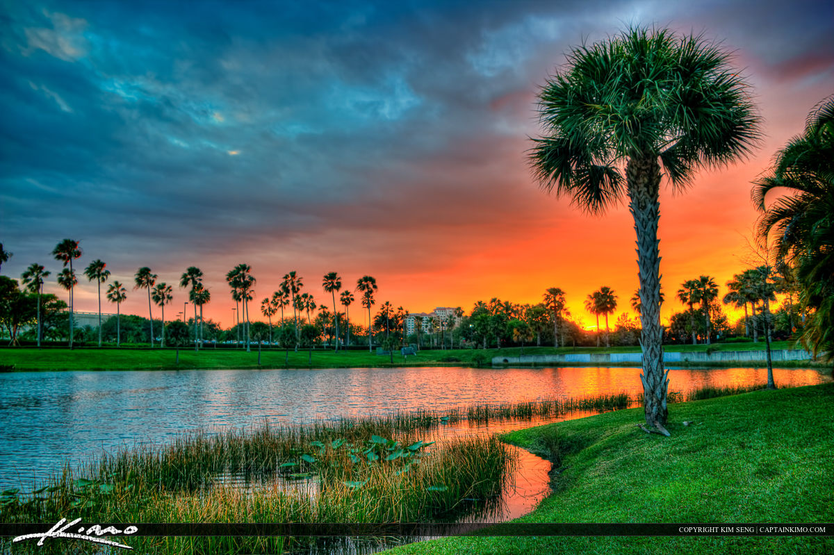 Palm Tree at Lake Property Sunset Palm Beach Gardens
