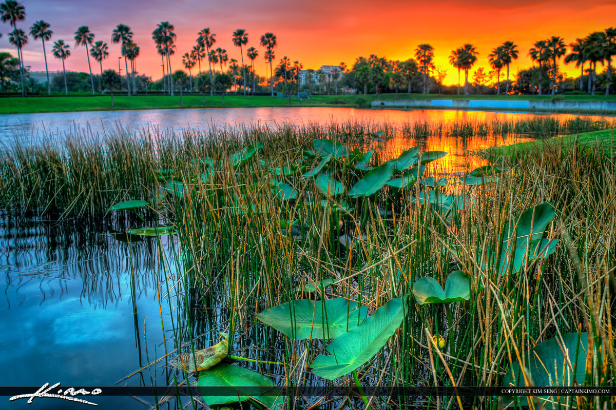 Lilypads at Lake Property Sunset Palm Beach Gardens