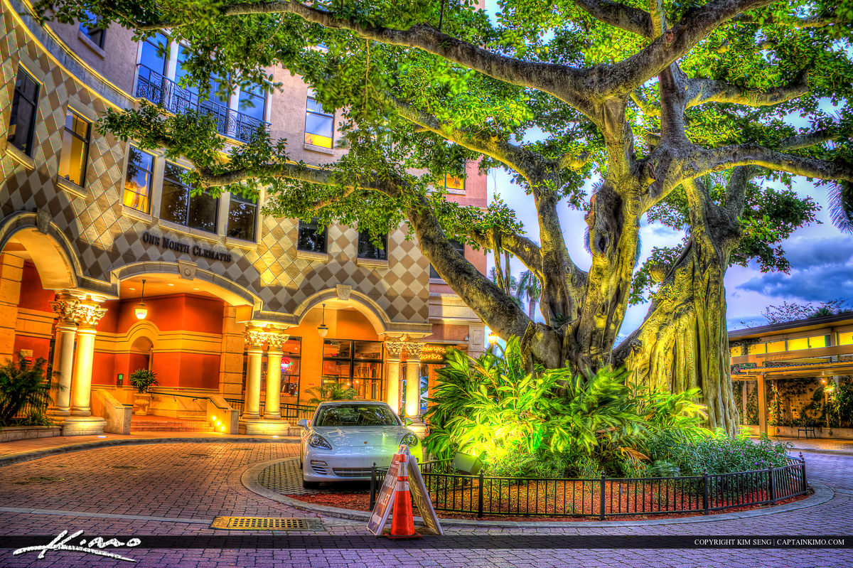 Downtown Clematis West Palm Beach Banyan Tree