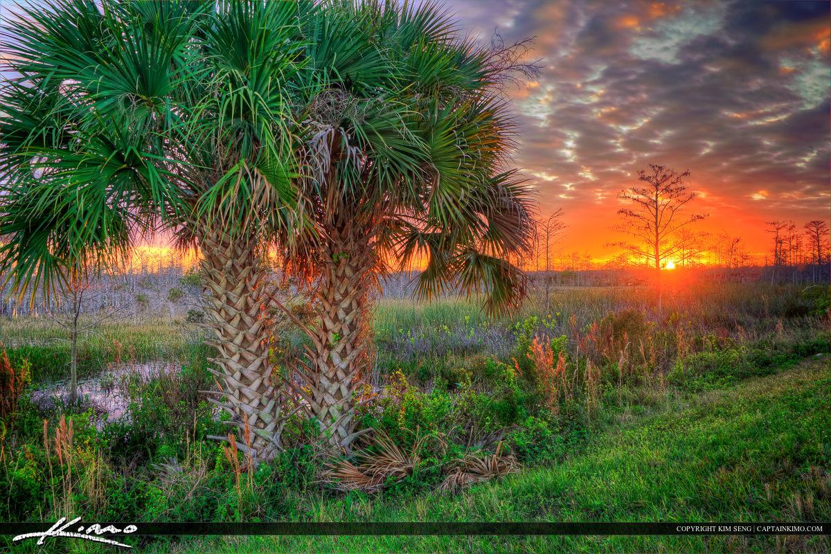 Palm Trees at Sunset Palm Beach Gardens Wetlands