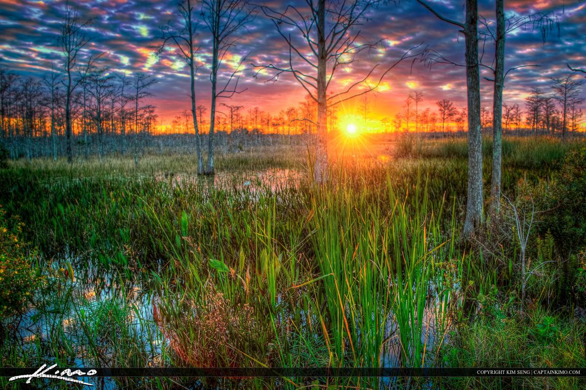 Sunset at Swamp Palm Beach Gardens Wetlands