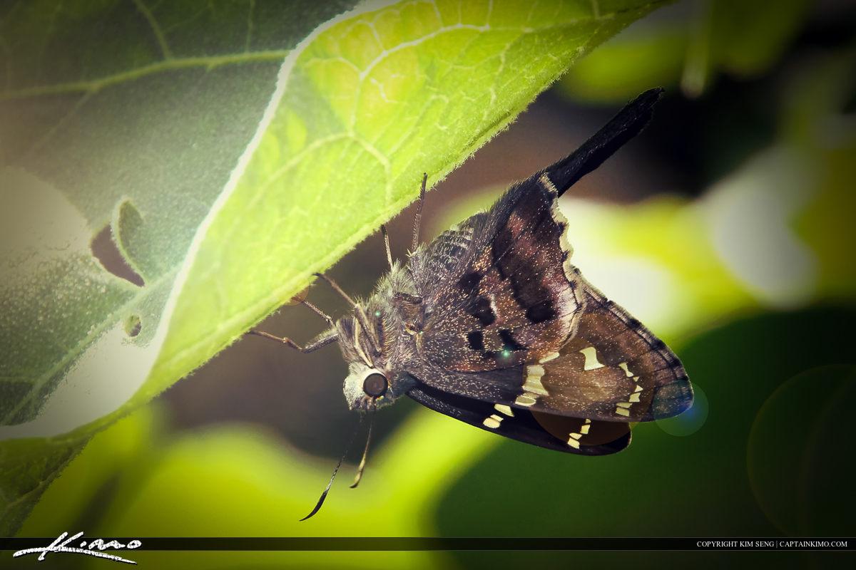 Moth Upside Down on Leaf