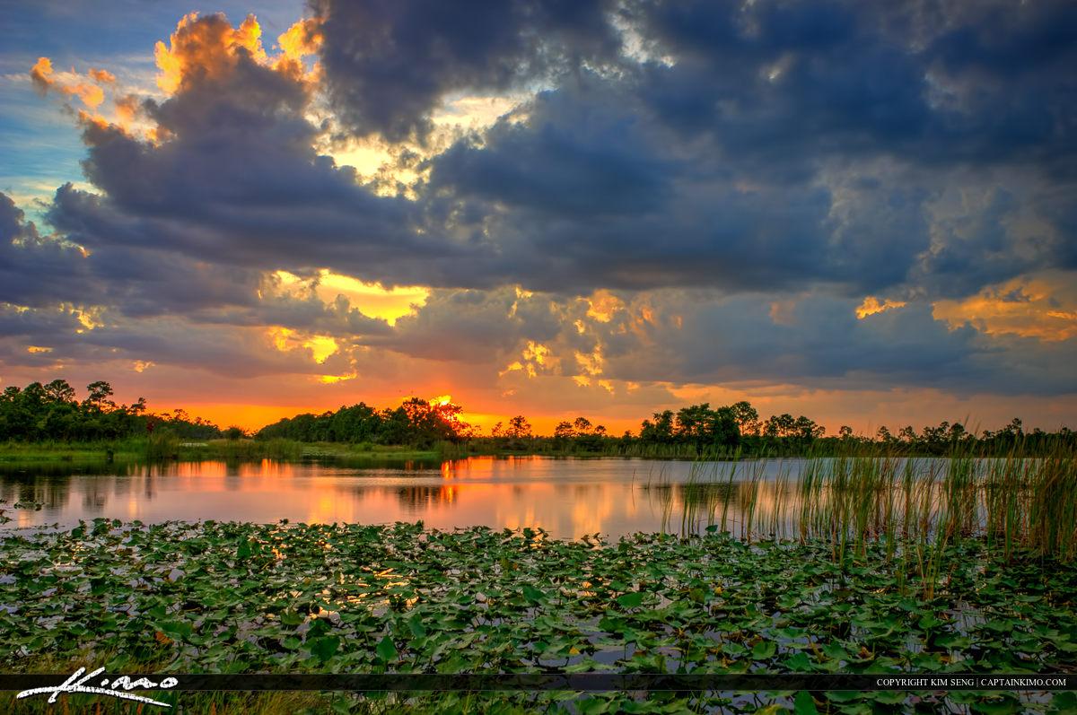Sunset at the Lake with Lilypads Jupiter Florida