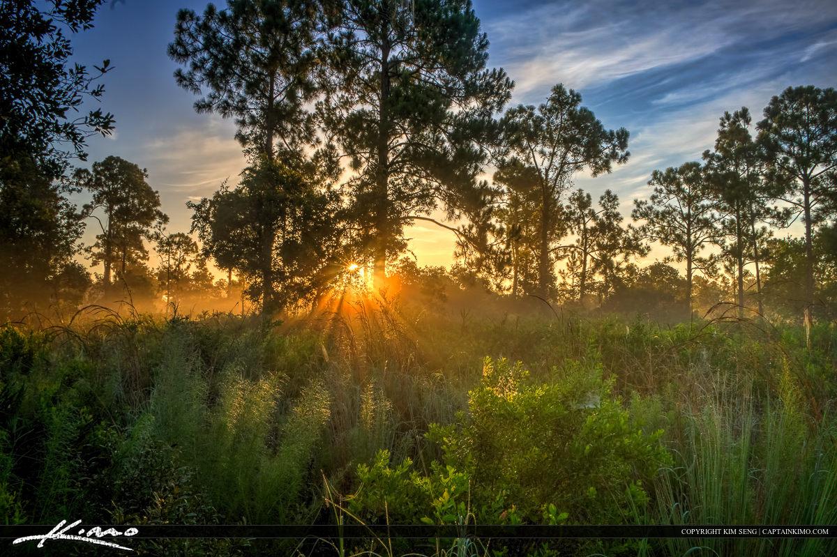 HDR Photography Foggy Morning Sunrise