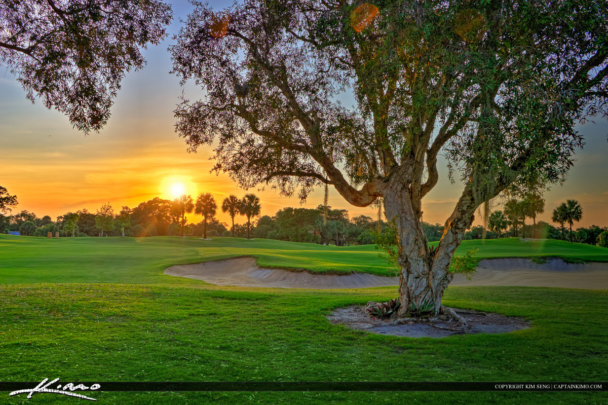 Trees at Golf Course North Palm Beach Florida