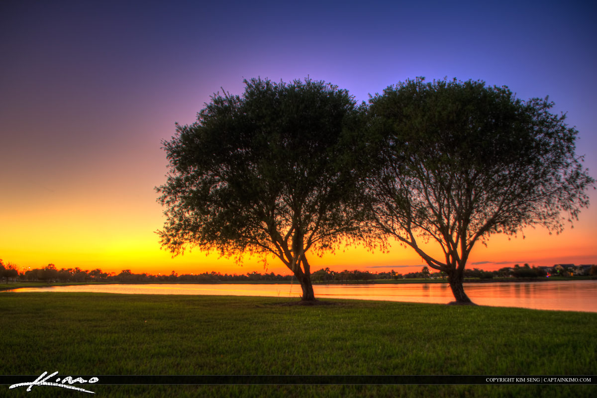 Tree at Tradition Lake Port St Lucie Florida