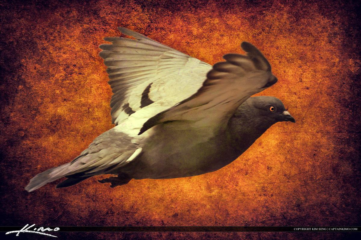 Pegion Old Texture Bird In Flight Art Photography