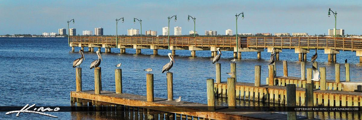 Pelicans on Dock Jensen Beach Florida