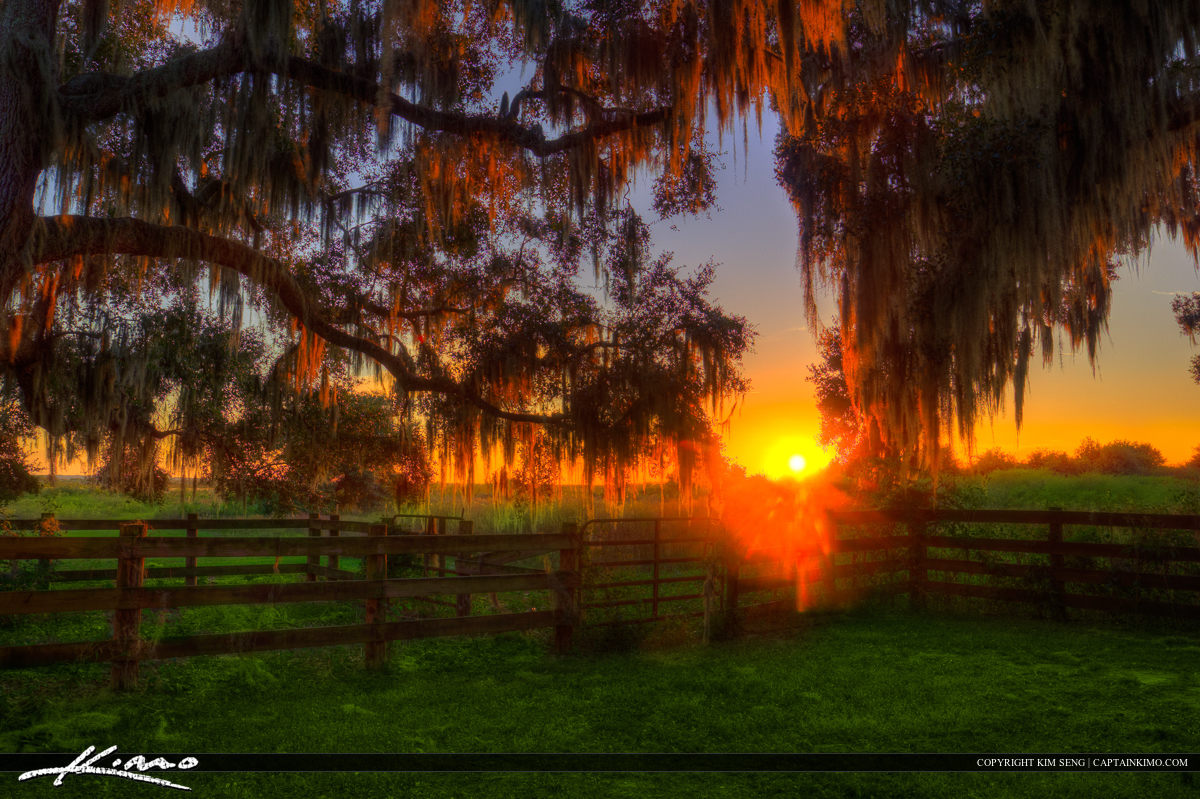Sunset at Paynes Prairie Ranch Gainesville Florida