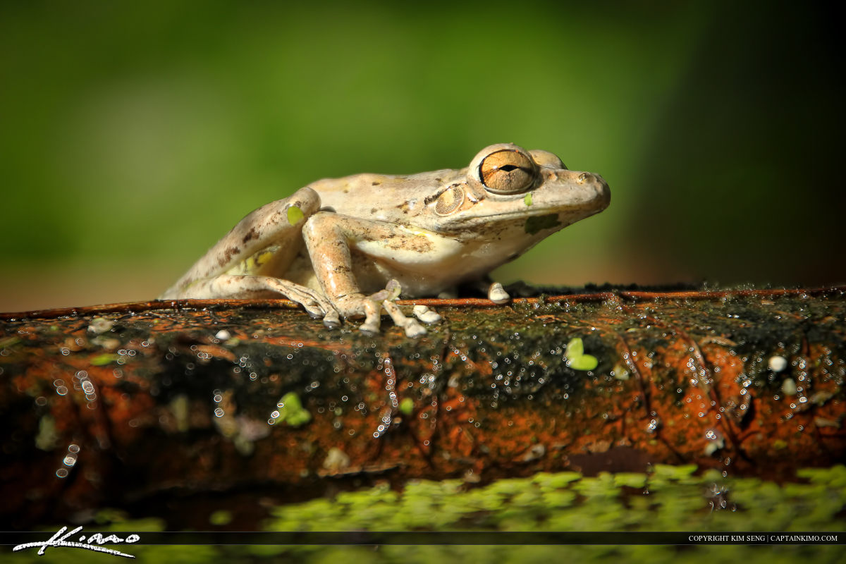 Tree frog from the backyard sitting on a ceramic pot