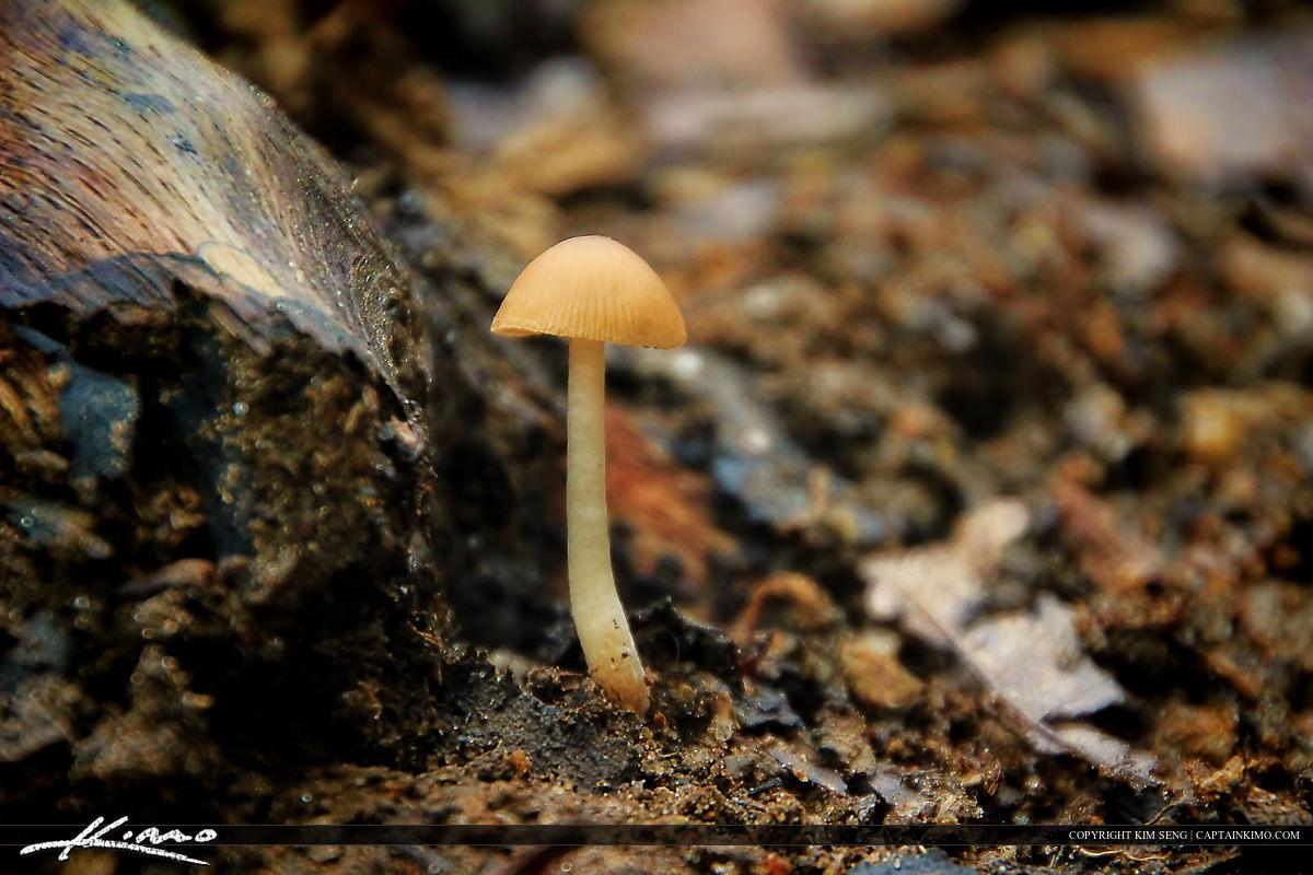 Wild Mushrooms from North Carolina Small Umbrella Shroom