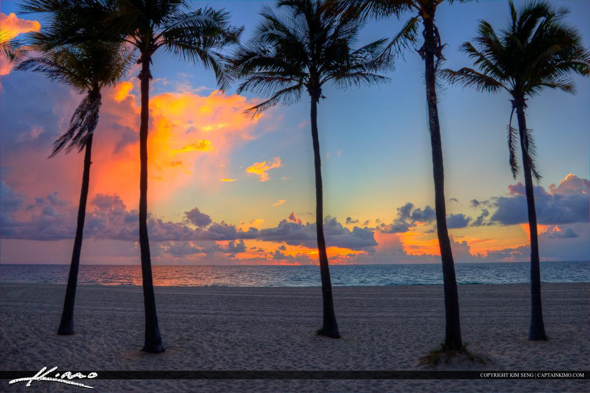Palm Tree Sunrise Fort Lauderdale Beach