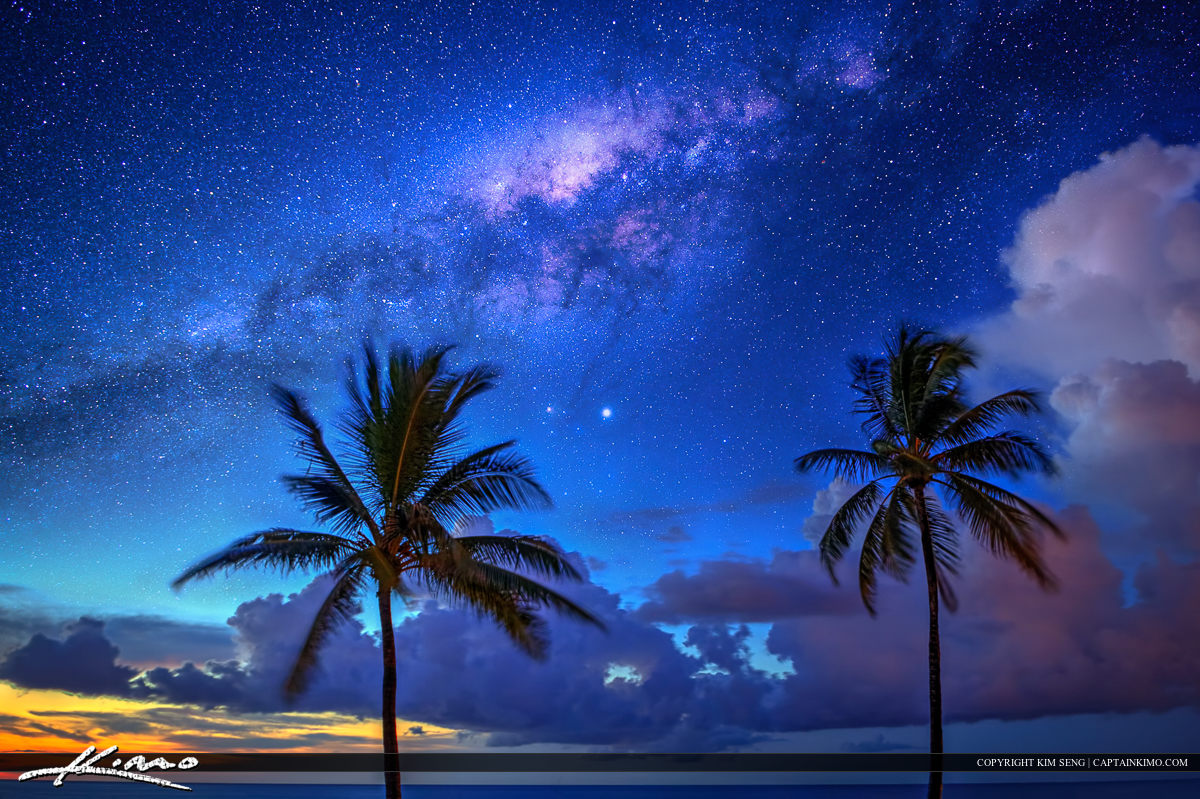 Palm Tree Under the Milky Way Over Ocean