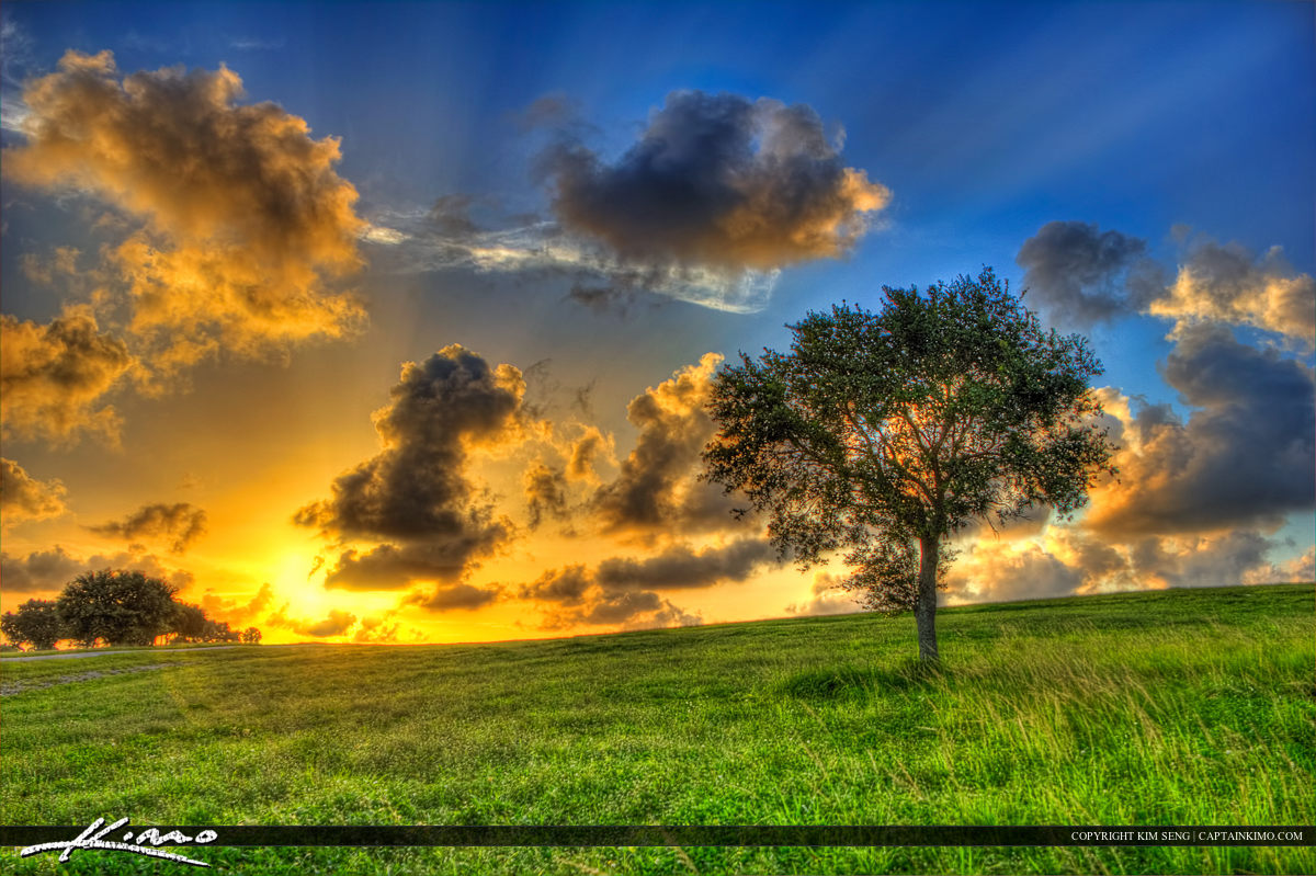 Tree on Hill at Sunset Dyer Park West palm Beach Florida