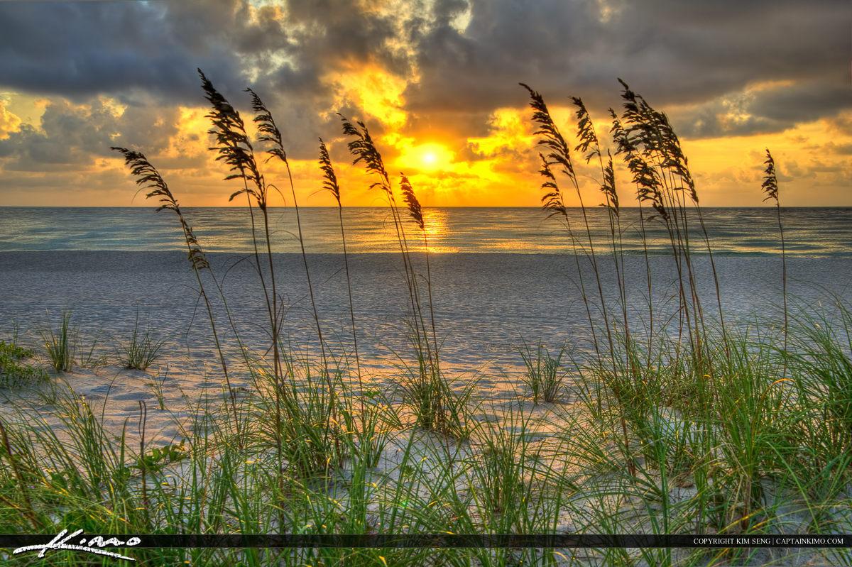 Seaoats at Sunrise Palm Beach County Florida