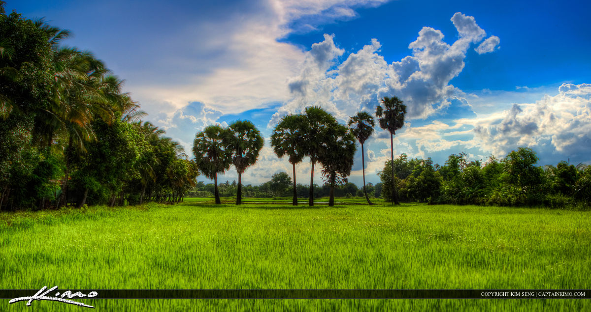 Rice Field in Battambang Cambodia