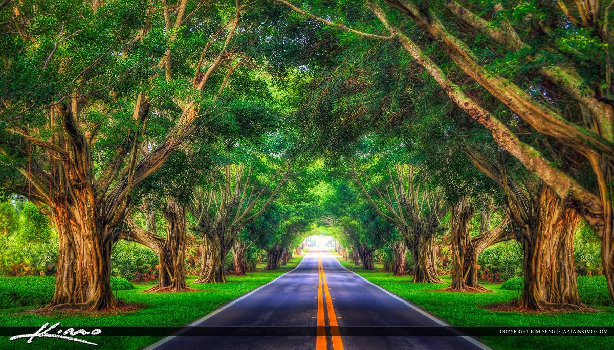 Road Underneath the Bayan Trees Hobe Sound Florida