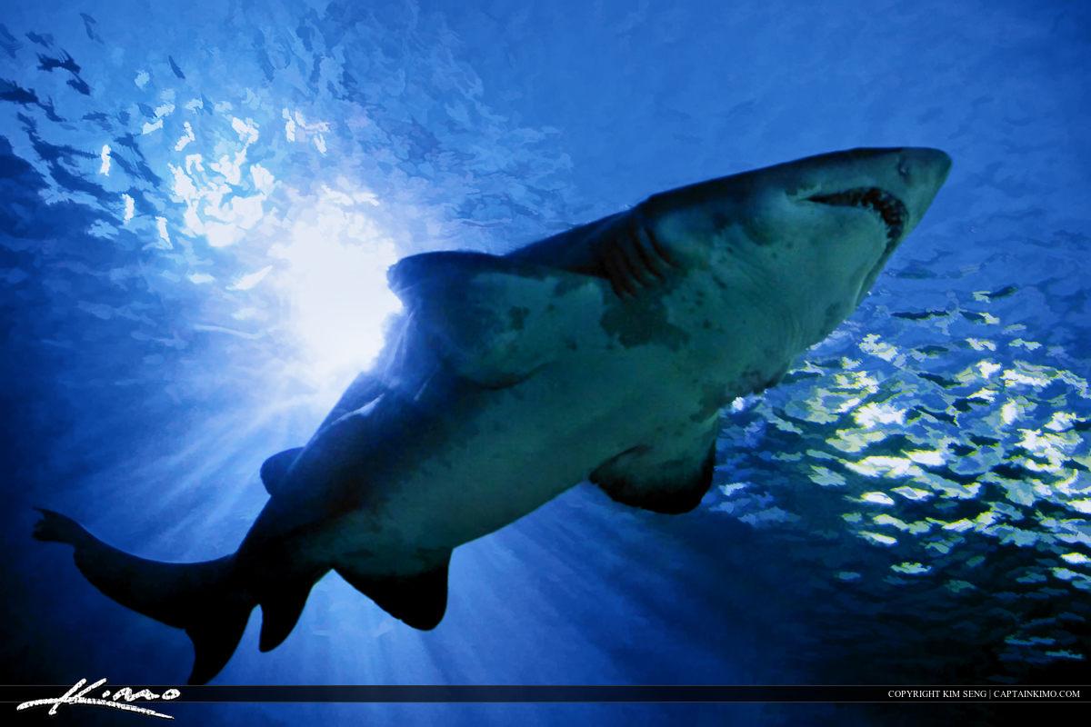 Sea Beast Large Tiger Shark at Thailand Aquarium