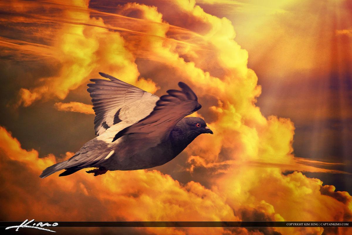 Pigeon Columbidae Bird Flying in Cloud Sky
