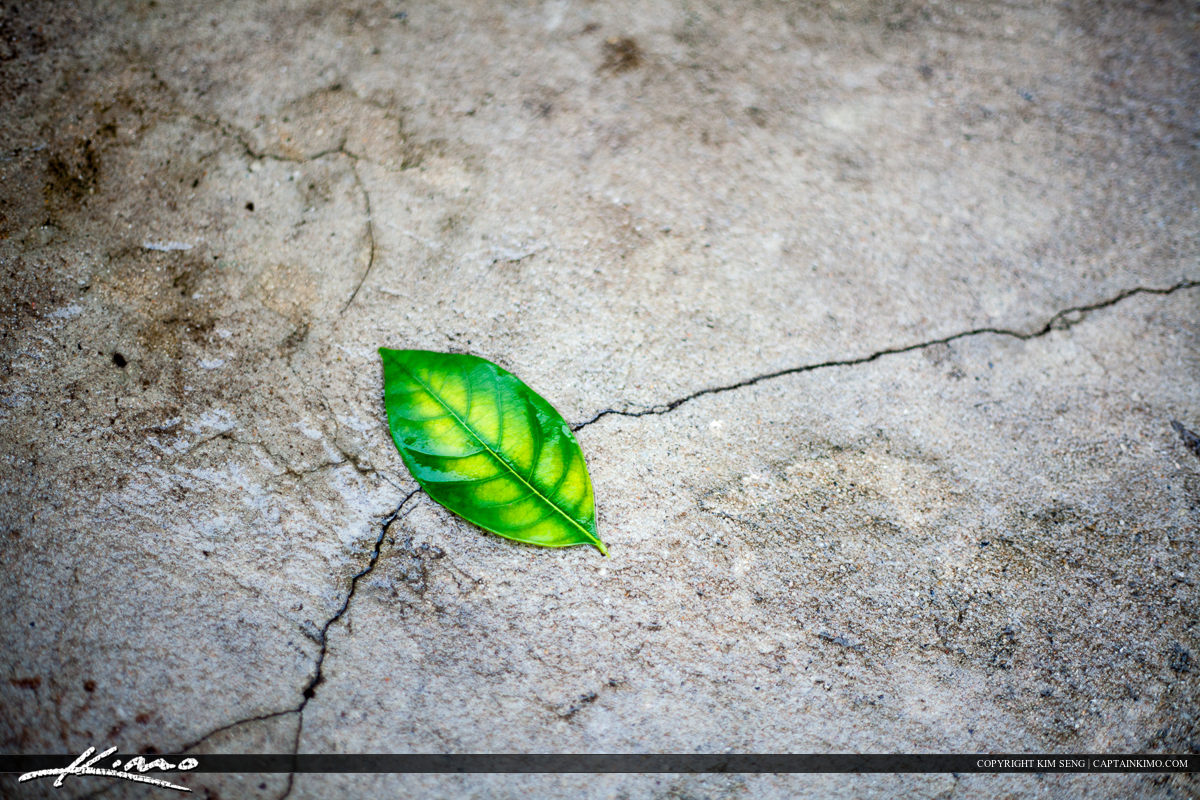 Simple Leaf on Concrete in Thailand Village