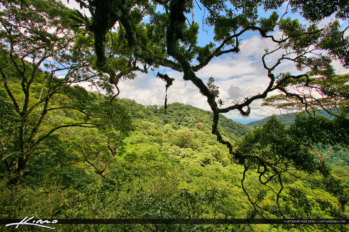 Tree Canopy at Tropical Rainforest in Costa Rica
