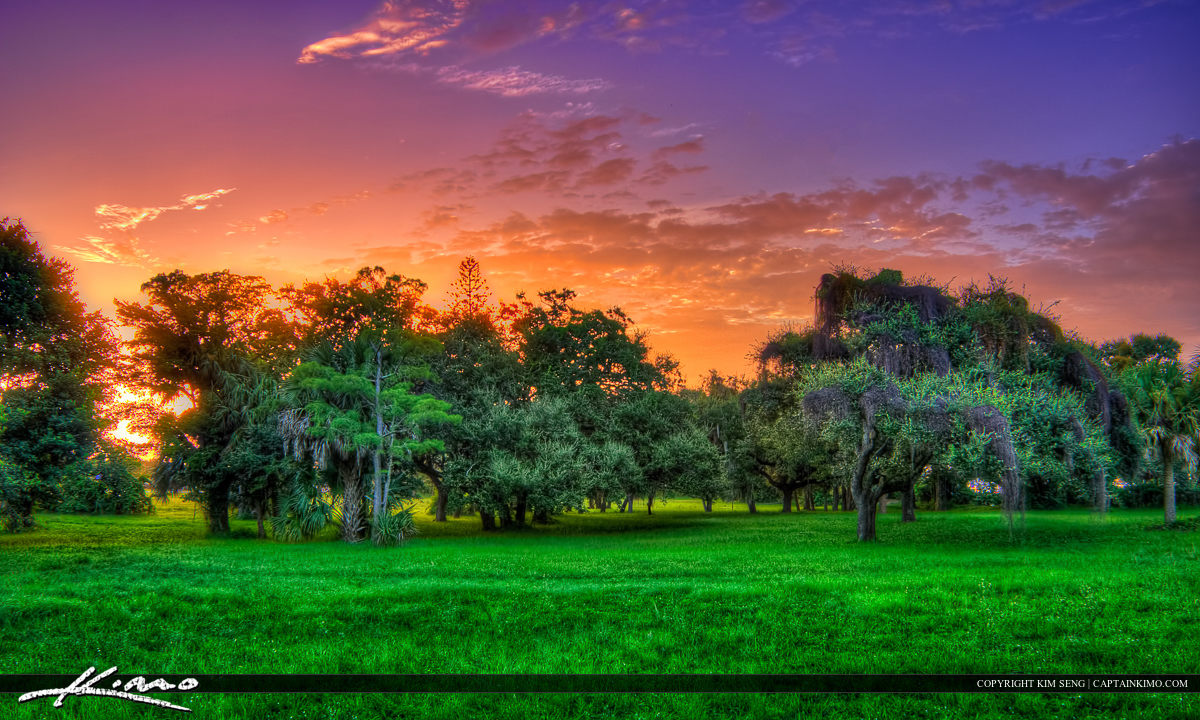 Magic Forest Colorful Grass Jupiter Florida