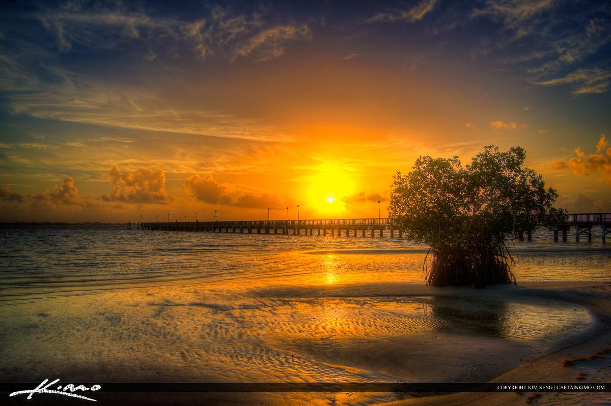 Mangrove tree in Riverside Park during sunrise Jensen Beach