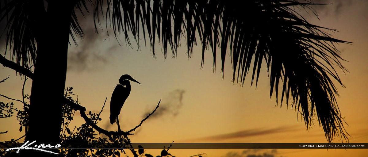 Egret Silhouette at Lake Osborne During Sunset