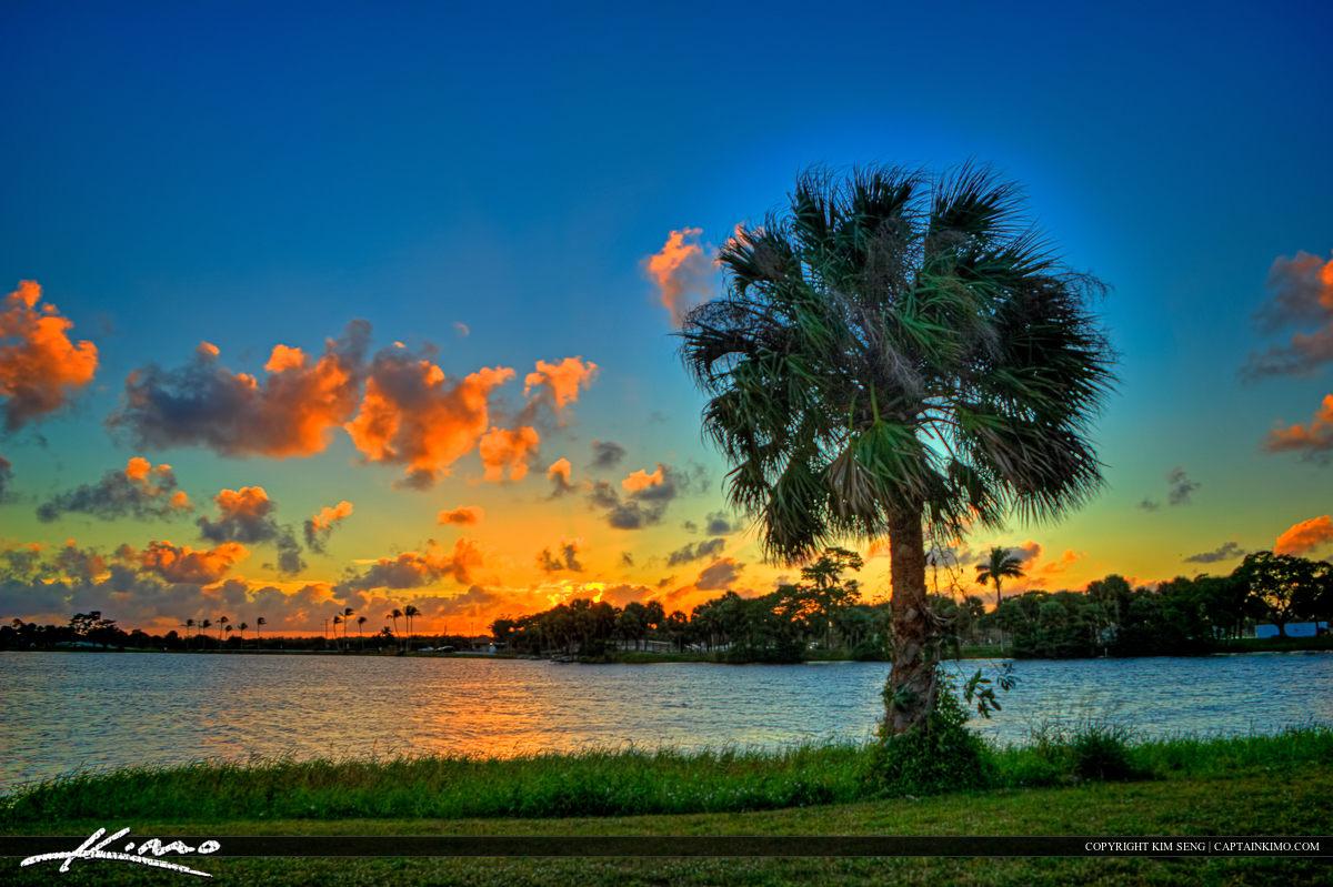 Cabbage palm at sunset at Lake Osborne Lake Worth Florida