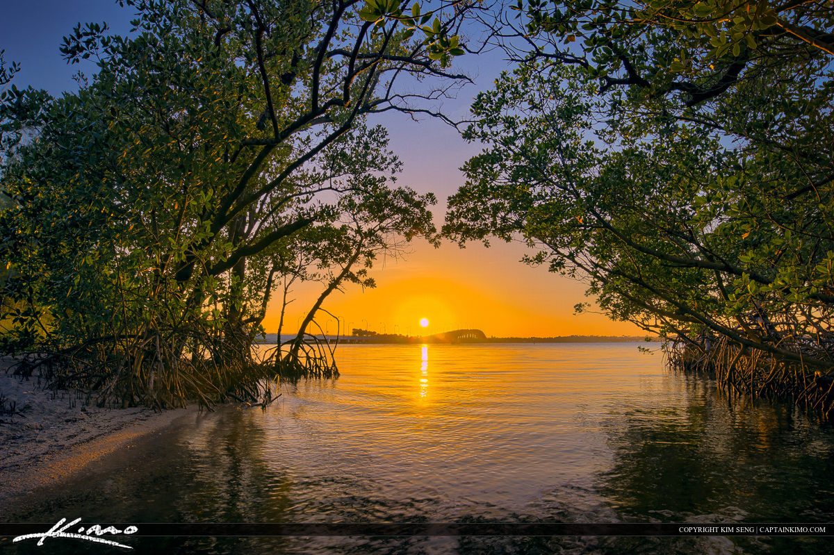 Indian River Lagoon Mangrove Jensen Beach Florida