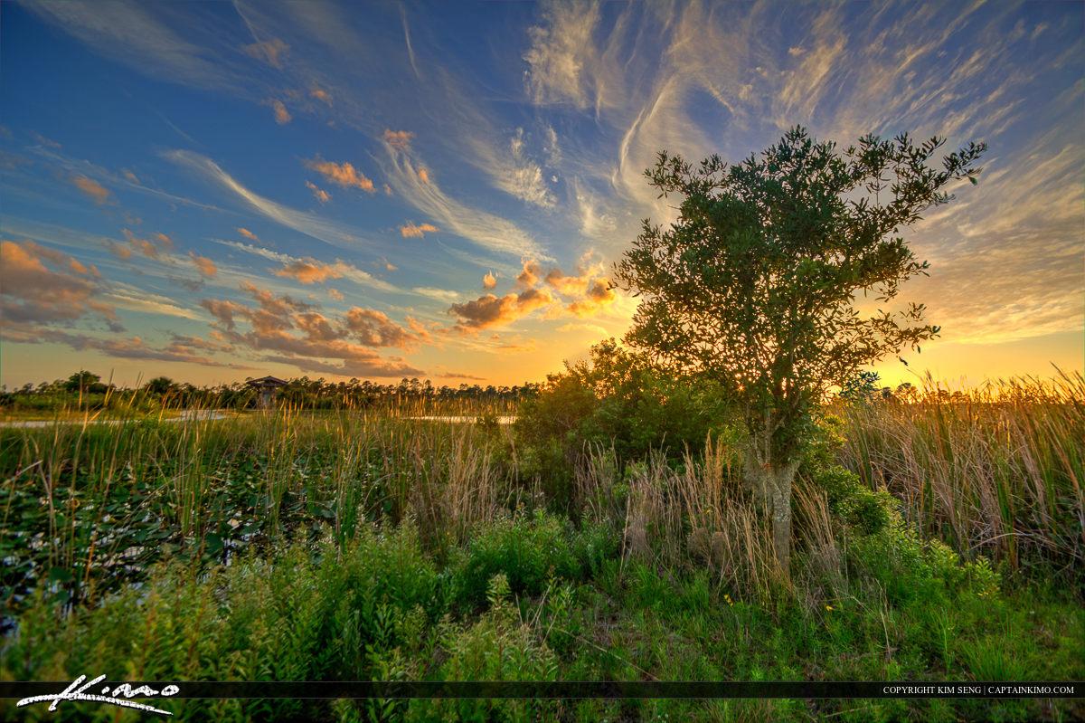 Florida Swamp Lands During Sunset