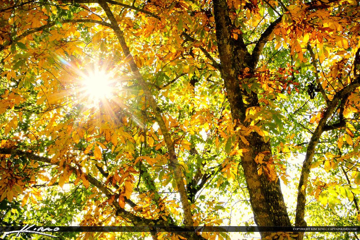 Blue Ridge Parkway Sunrays Fall Color Leaves