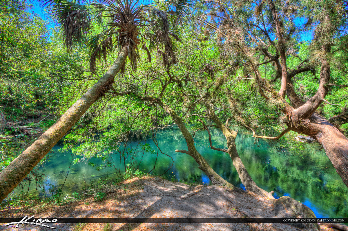 Hillsborough River State Park Trees