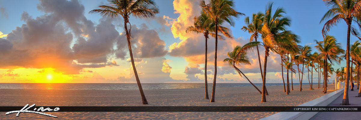 Fort Lauderdale Coconut Palm Tree Panorama