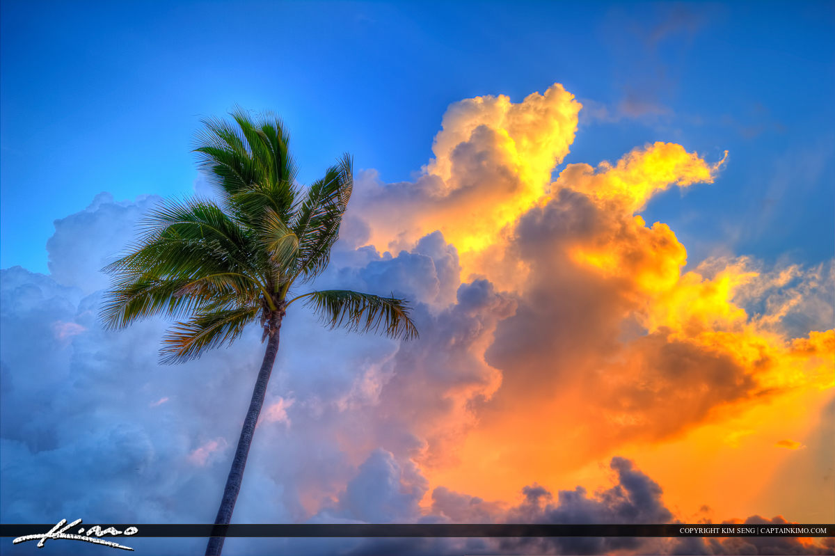 Coconut Tree at Fort Lauderdale Beach Park Sunrise