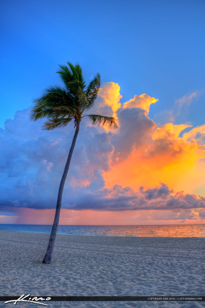 Fort Lauderdale Beach Park Sunrise Coconut Tree