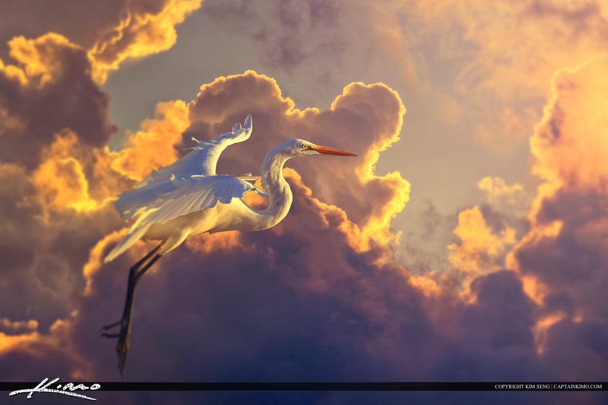 White Egret Inflight Pastel Clouds Background
