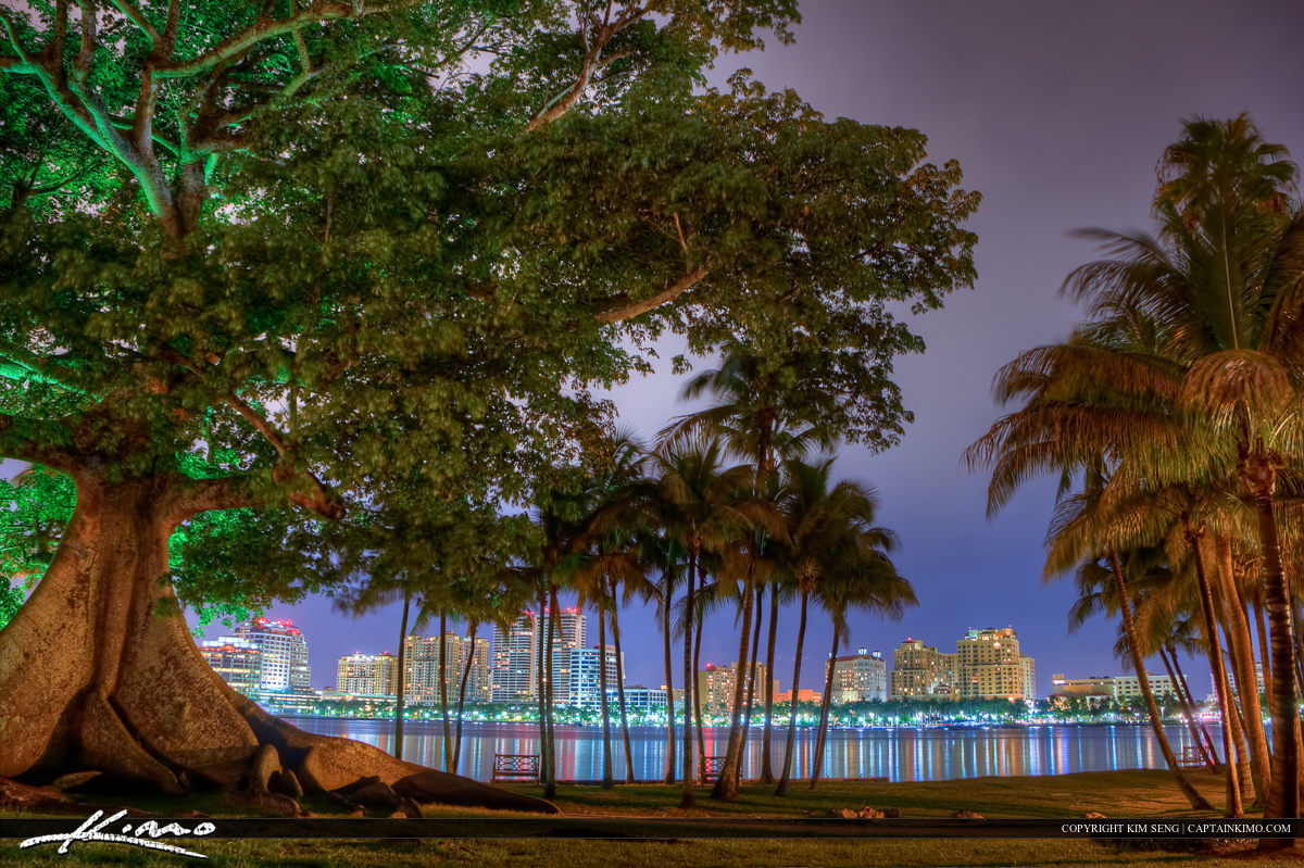 Kapok Tree at Flagler Museum in Palm Beach Island