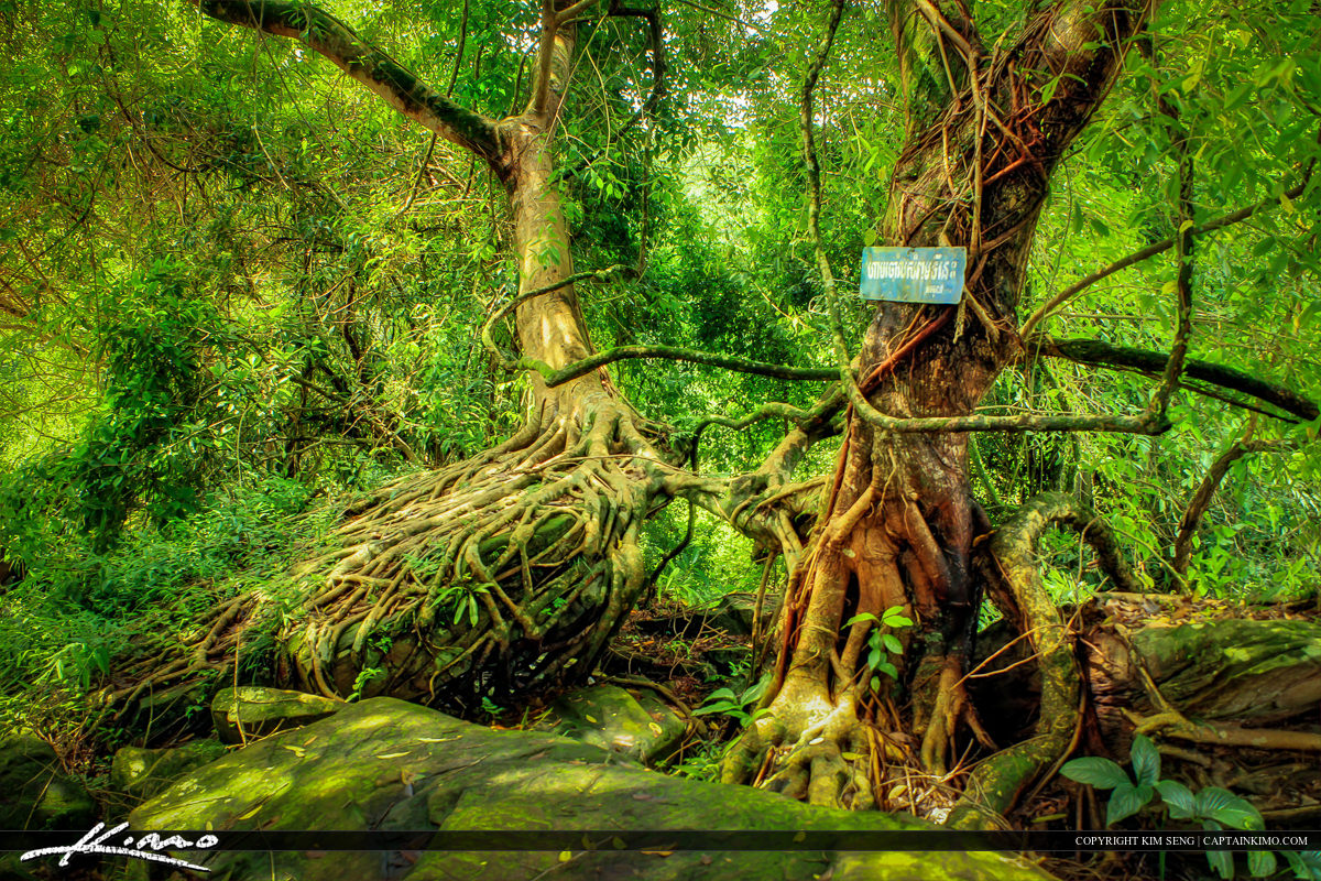 Jungle in Kbal Chhay Sihanoukville Cambodia