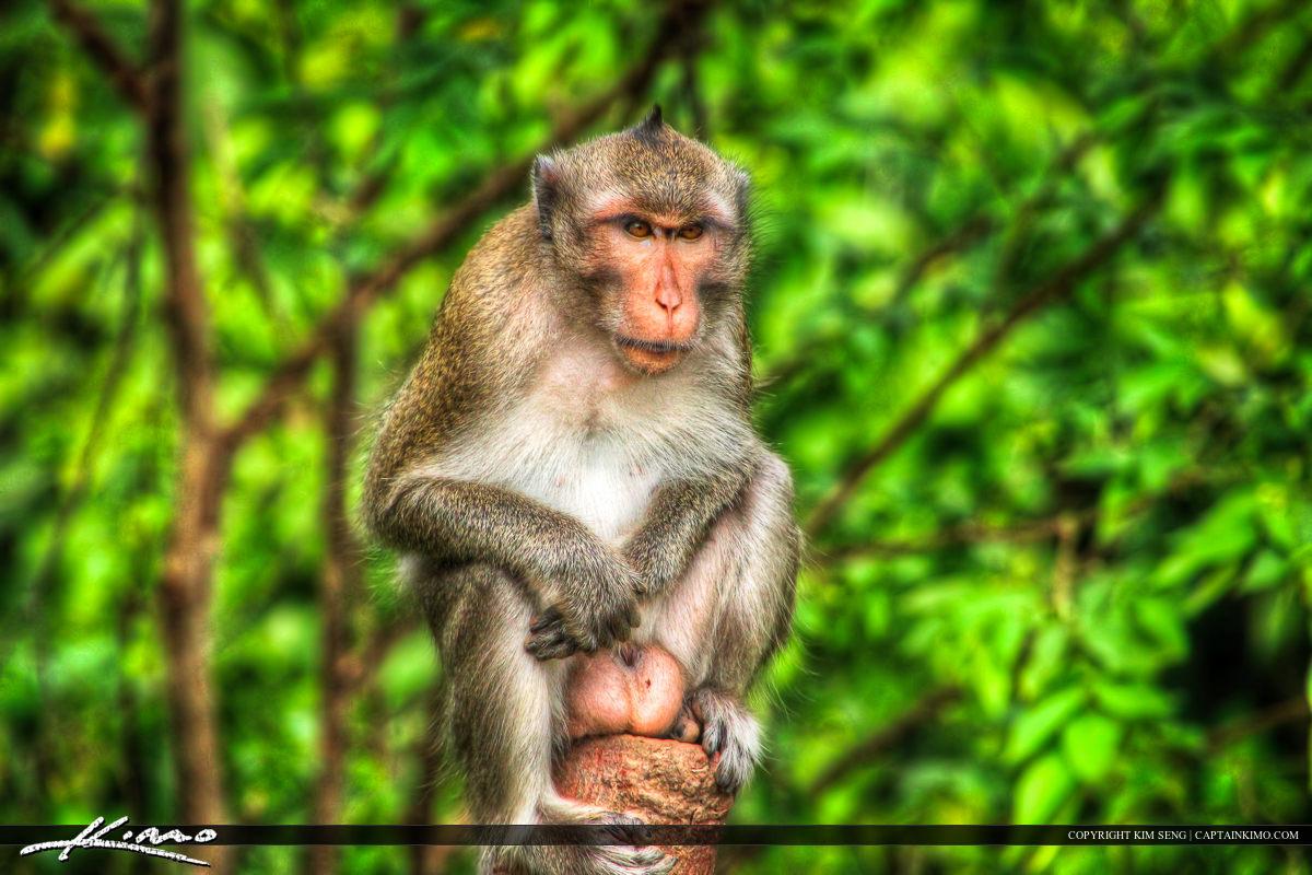Grumpy on Stump from Kampong Som Cambodia