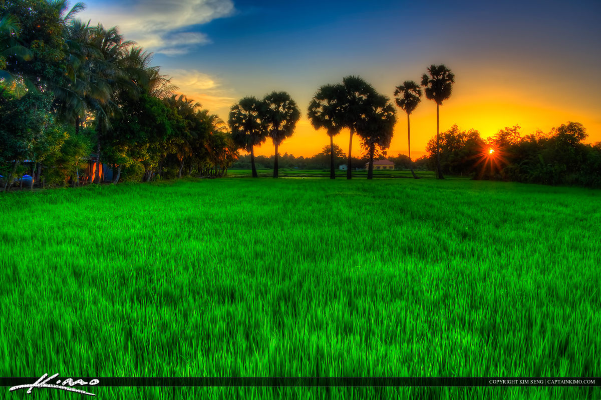 Cambodian Rice Field During Sunset in Battambang
