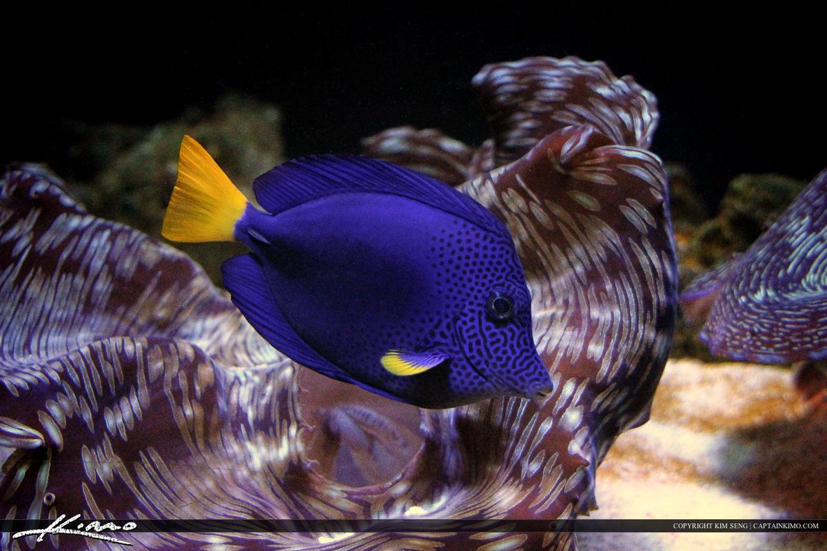 Blue Fish at Siam Paragon Aquarium