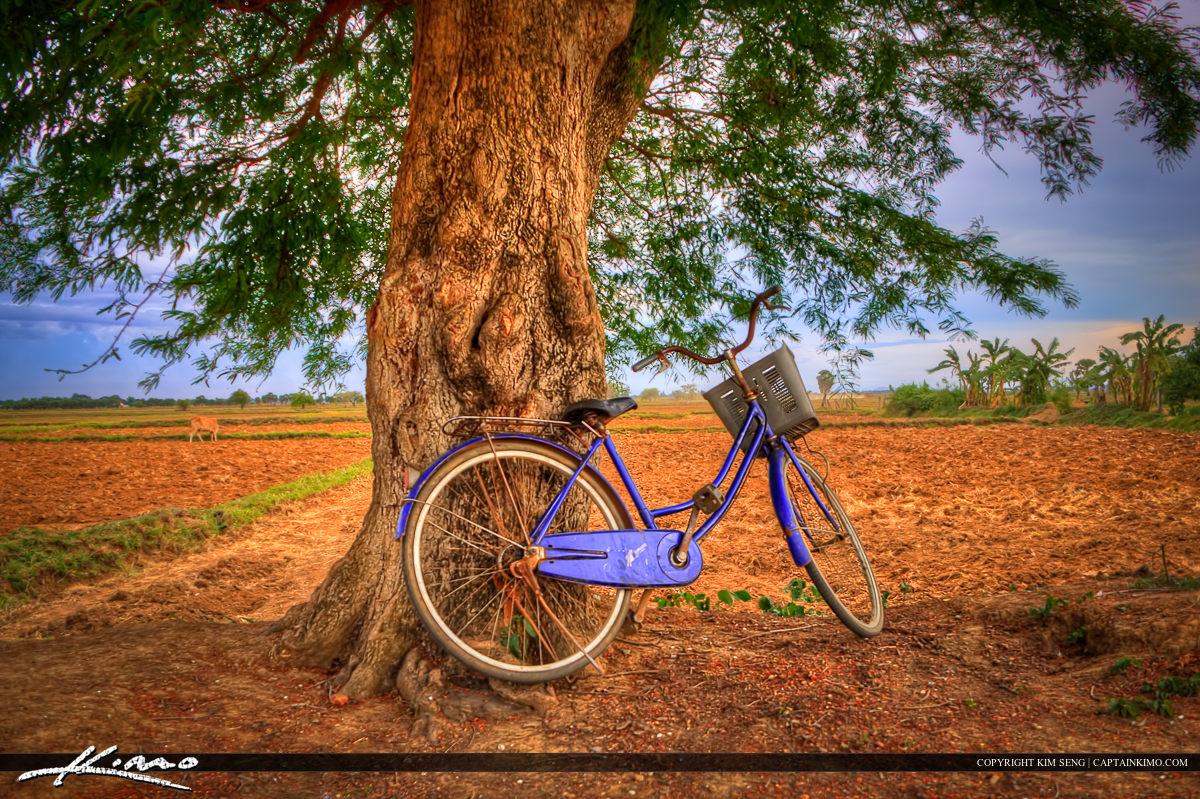 Cambodian Bicycle Under Tree at Farm in Battambang