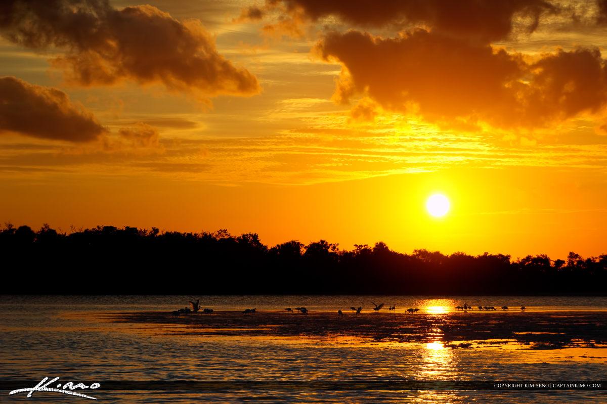 Ibis at Lake Worth Lagoon During Sunset