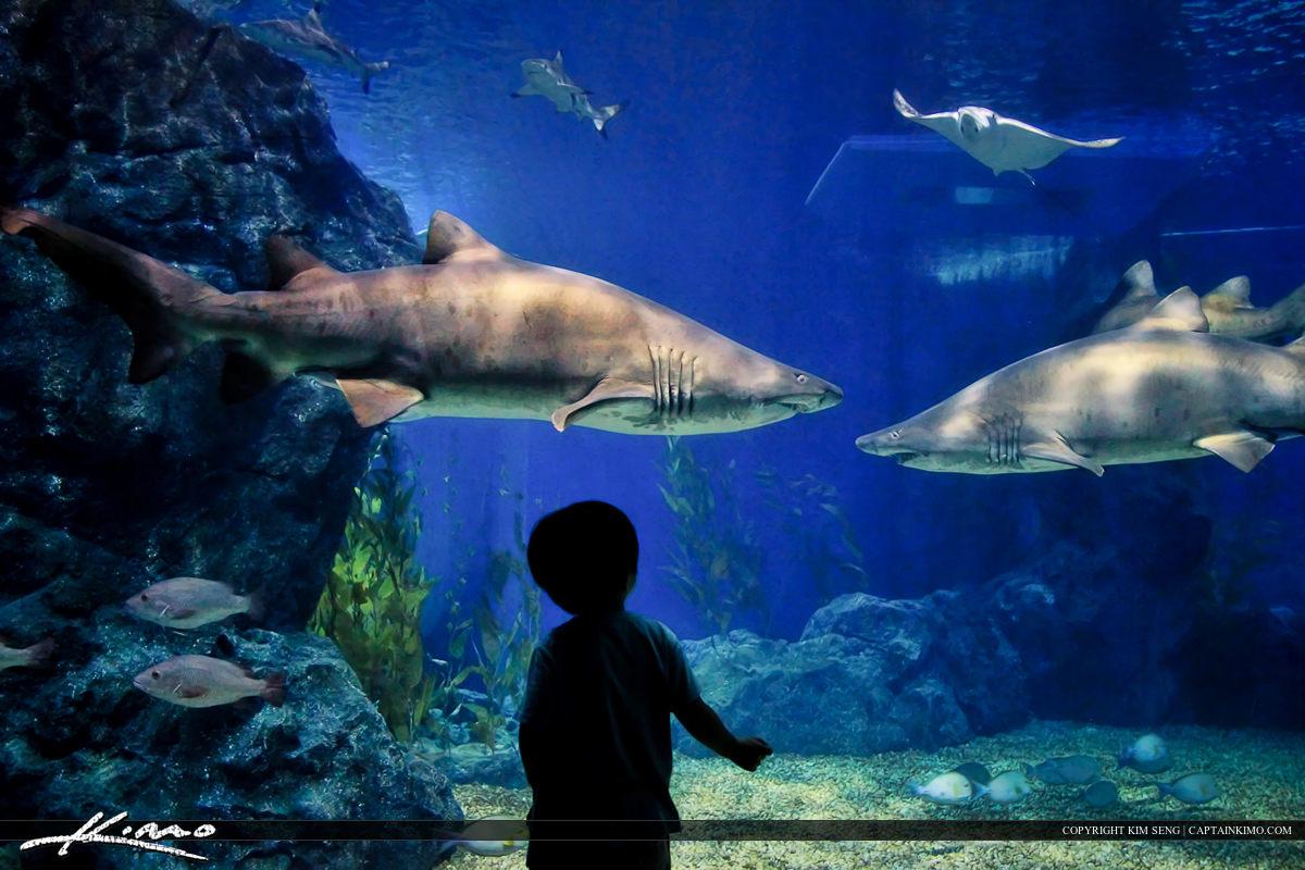Little Boy at Shark Tank in Siam Paragon Thailand