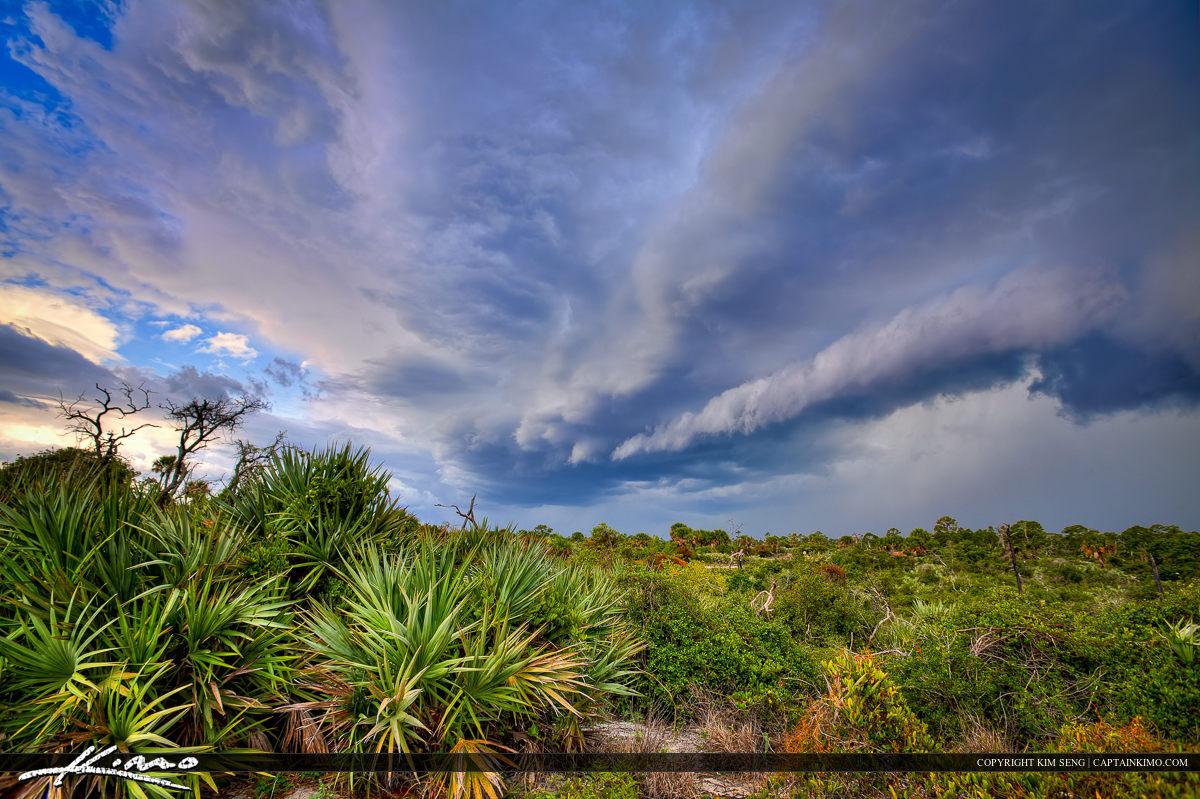 Dark Storm Cloud Over Jonathan Dickinson State Park Scrub Area