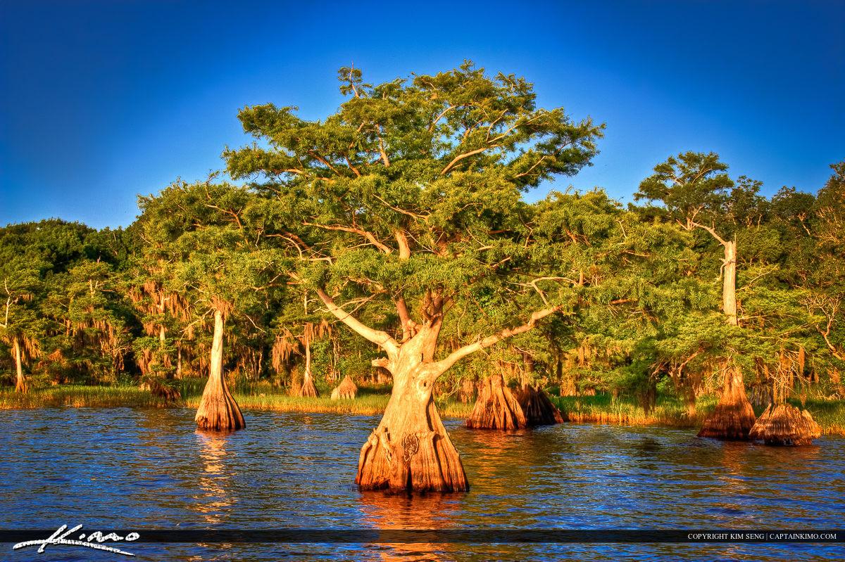 Blue Cypress Lake Indian River County Florida