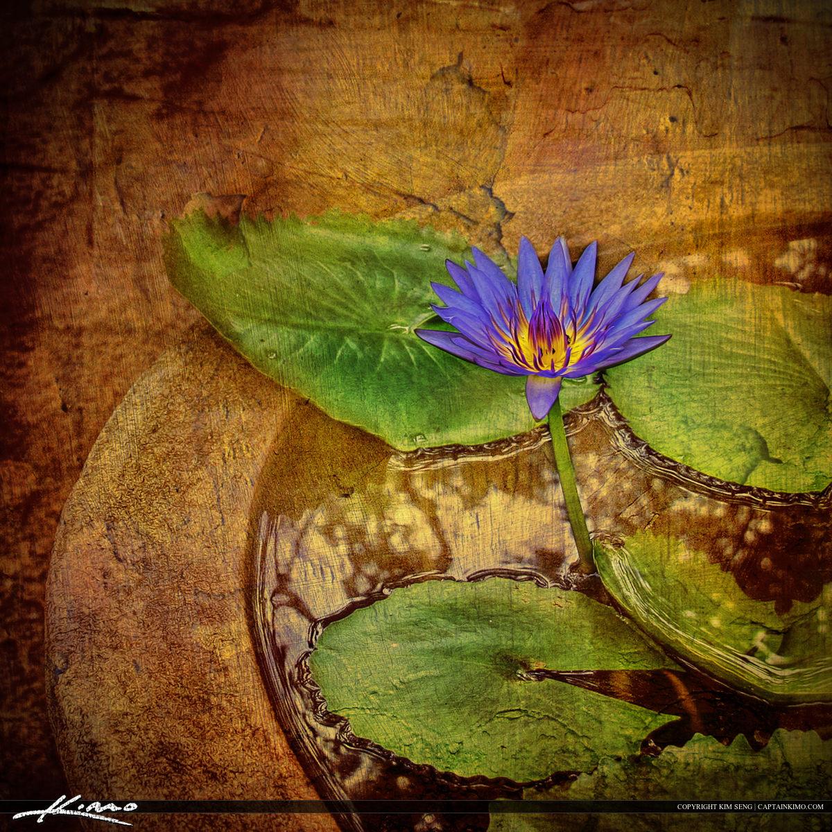 lotus flower picture texture